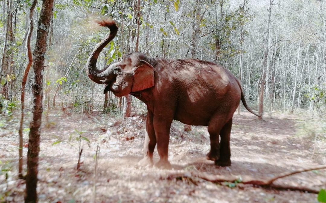 Mondolkiri & le sanctuaire des éléphants