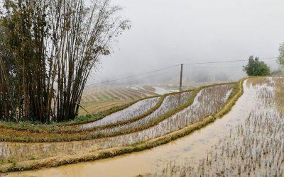 Le Nord du Vietnam : Bac Ha & son marché du dimanche